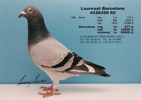 Laureaat Barcelona Remi 4428350 92